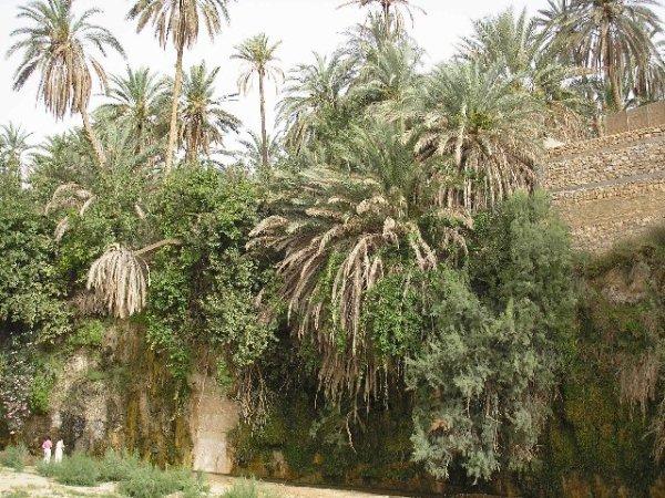 tameghza